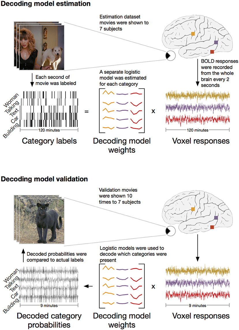Decoding the Semantic Content of Natural Movies from Human